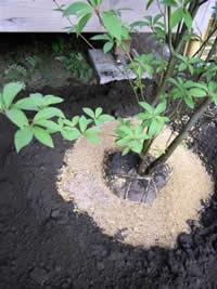 土壌へのこだわり 写真 画像